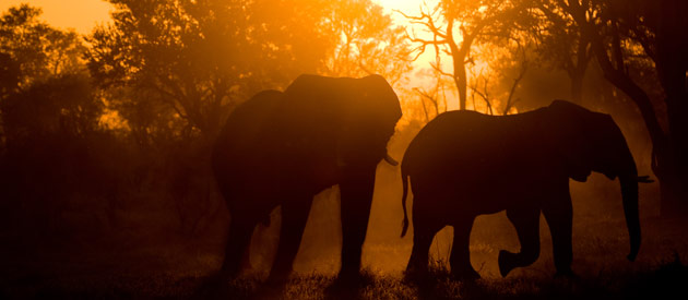 Malawi hosts one of the world's largest elephant translocations